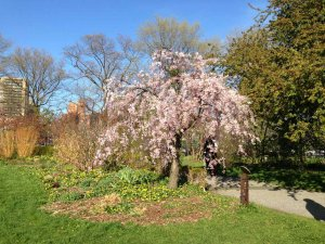 Queens Botanical Garden Creation And Site